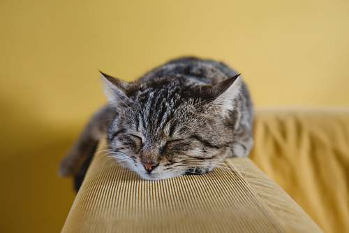 photo pet shallow focus photography of brown tabby kitten on couch animal free for commercial use images