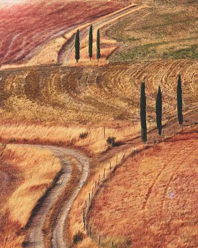 road landmark photography of orange and red grasses field with pathway and green trees gravel