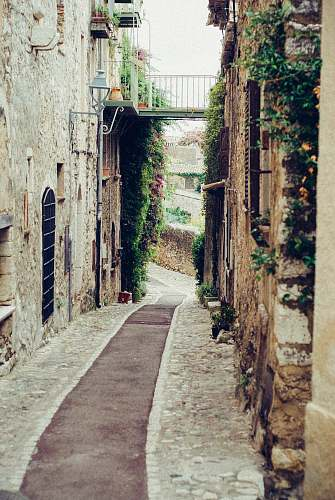 photo plant narrow pathway surrounded by concrete of buildings alley free for commercial use images