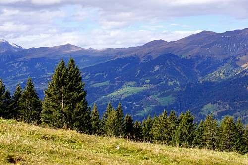 schanfigg green pine trees under cloudy sky mountain