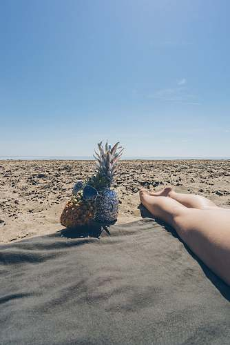 photo human two pineapple near barefooted person on brown field horizon free for commercial use images