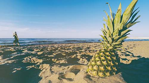 photo fruit green pineapple on seashore during daytime plant free for commercial use images