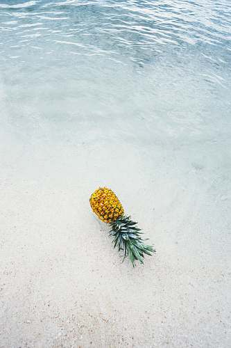 photo fruit pineapple on seashore summer free for commercial use images