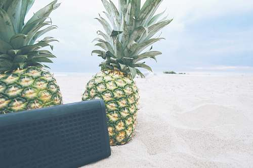 photo food rectangular black Nixon portable Bluetooth speaker near two pineapples fruit free for commercial use images