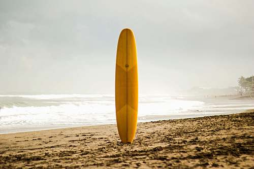 outdoors brown surfboard standing on sea shore nature