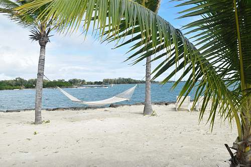 water white hammock in between palm tree on seashore palm tree