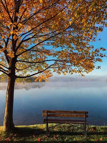 bench brown wooden bench beside tree autumn