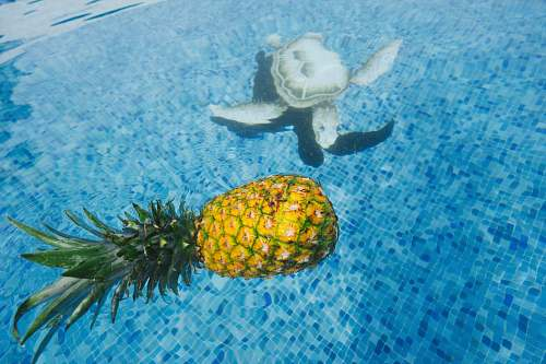 photo water pineapple on body of water sea turtle free for commercial use images