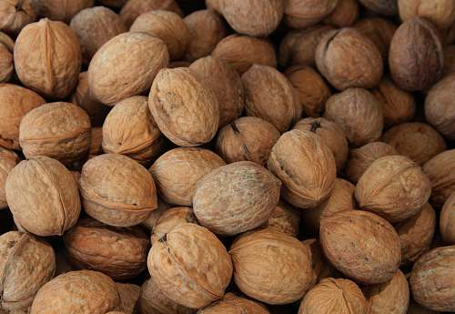 photo walnut brown nut lot flora free for commercial use images