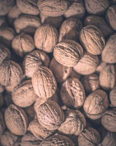 walnut walnut lot plant