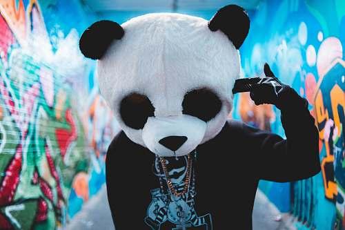 bear  giant panda