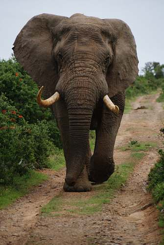 wildlife gray elephant walking beside green plants during daytime elephant