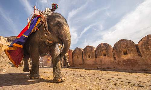 india man riding on walking elephant at daytime building