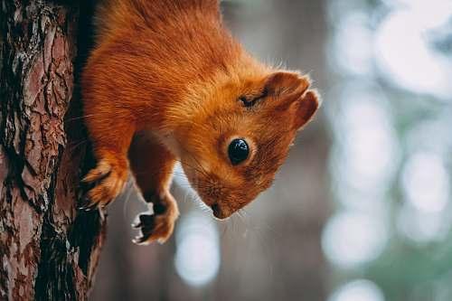 wildlife squirrel on tree trunk mammal