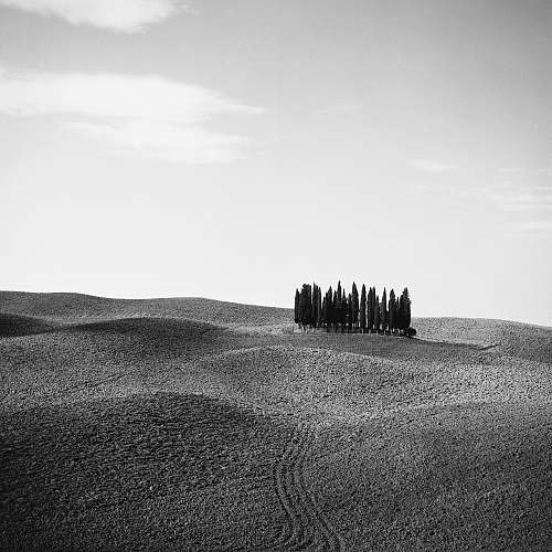 nature grayscale photo of trees on desert soil