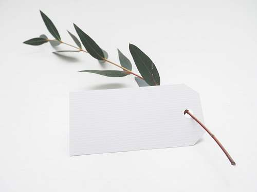 photo white green leaf with white card minimal free for commercial use images