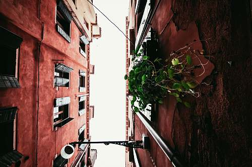 plant red painted buildings venice