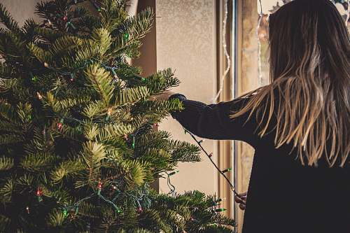 photo plant woman installing string lights on Christmas tree tree free for commercial use images