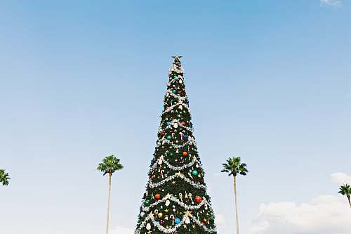 photo holiday Christmas tree palm tree free for commercial use images