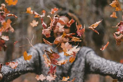 photo autumn woman throwing maple leaves outdoors free for commercial use images