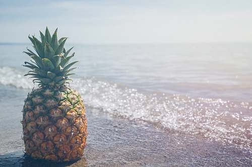 pineapple pineapple fruit on seashore photography fruit