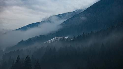 moody trees on side of mountain covered with fog at daytime mist