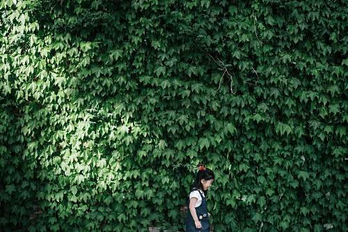 kid girl standing near wall covered with leafed plants during daytime ivy
