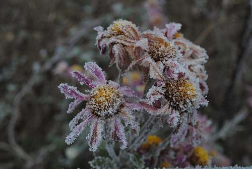 outdoors brown and purple-petaled flowers nature