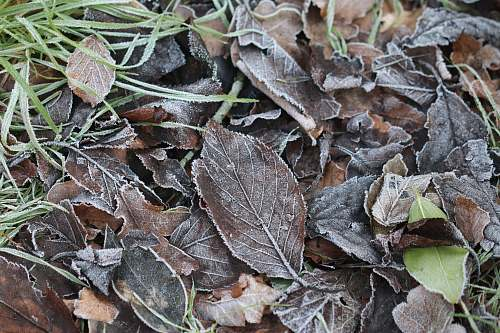 nature brown dried leaves outdoors