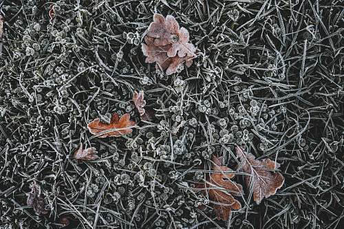 nature brown leaves on grass outdoors