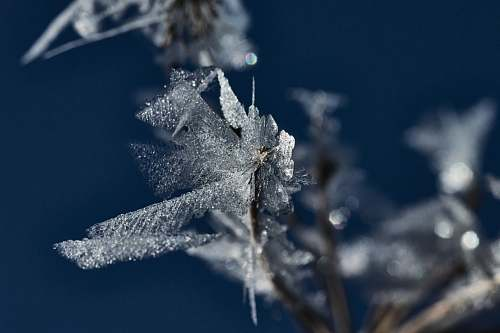 nature ice flakes outdoors