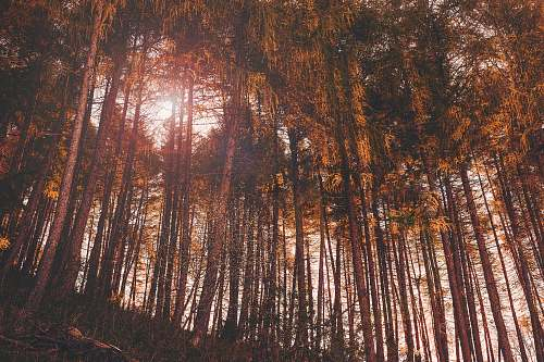 italy nature photo of tall trees during daytime forest