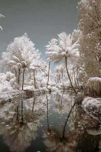 ice white trees near river painting outdoors