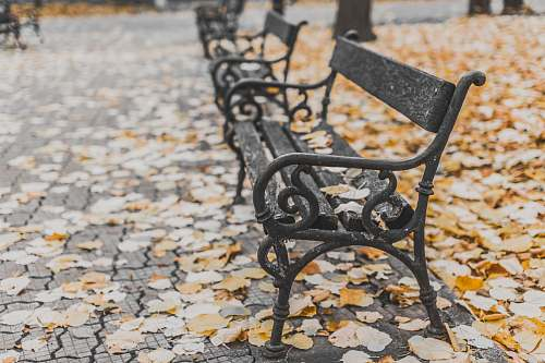 autumn macro shot of black metal bench fall