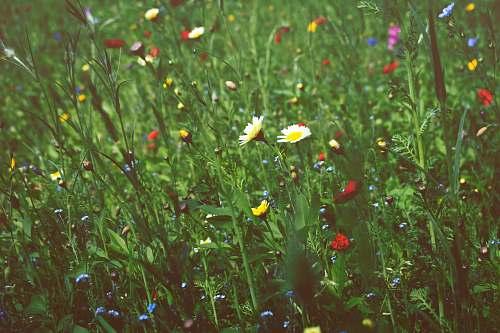 flower white daisy flowers grass