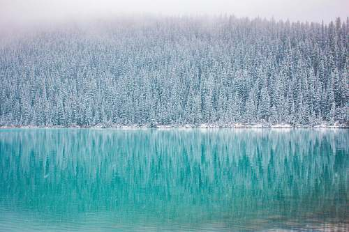lake louise green trees near body of water in landscape photography canada