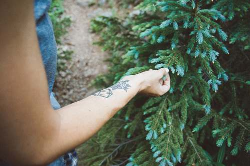 colorado person touching green leaf nature