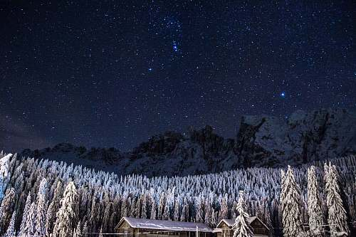 stars pine trees covered with snow under starry sky sky