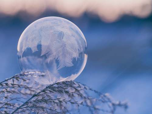 cold shallow focus photography of bubble on leaves nature