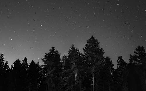 pine forest during night time grey