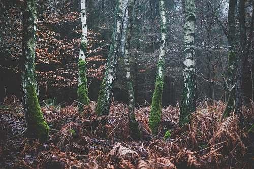 tree green bark trees outdoors