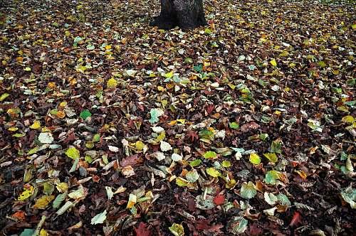 tree assorted leaves near tree trunk hamburg