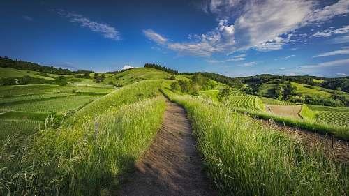 field photography of grass field grass