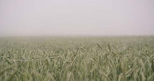 grass shift-tilt lens photograph of green field sky