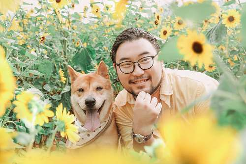 photo accessory photography of smiling beside brown dog near sunflower field during daytime glasses free for commercial use images