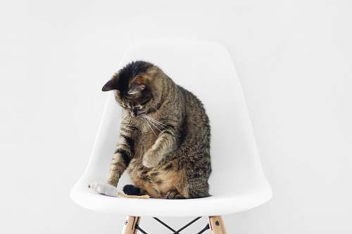 cat brown tabby cat sitting on bar stool animal wallpapers