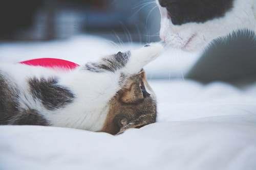 cat kitten poking cat's nose pet