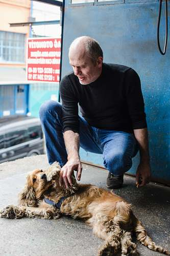 photo human man petting English cocker spaniel dog free for commercial use images