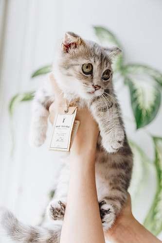cat person holding cat kitten