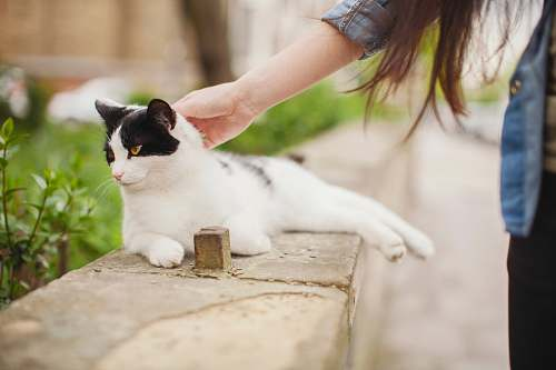 photo pet white cat lying on concrete bench while holding of woman cat free for commercial use images